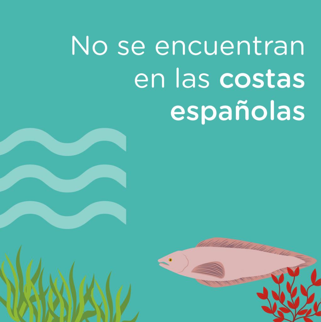 la rosada no vive en las costas españolas